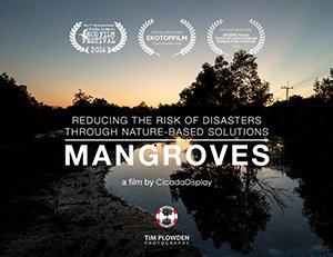 Mangroves : Reducing the risk of disaster through nature-based solutions